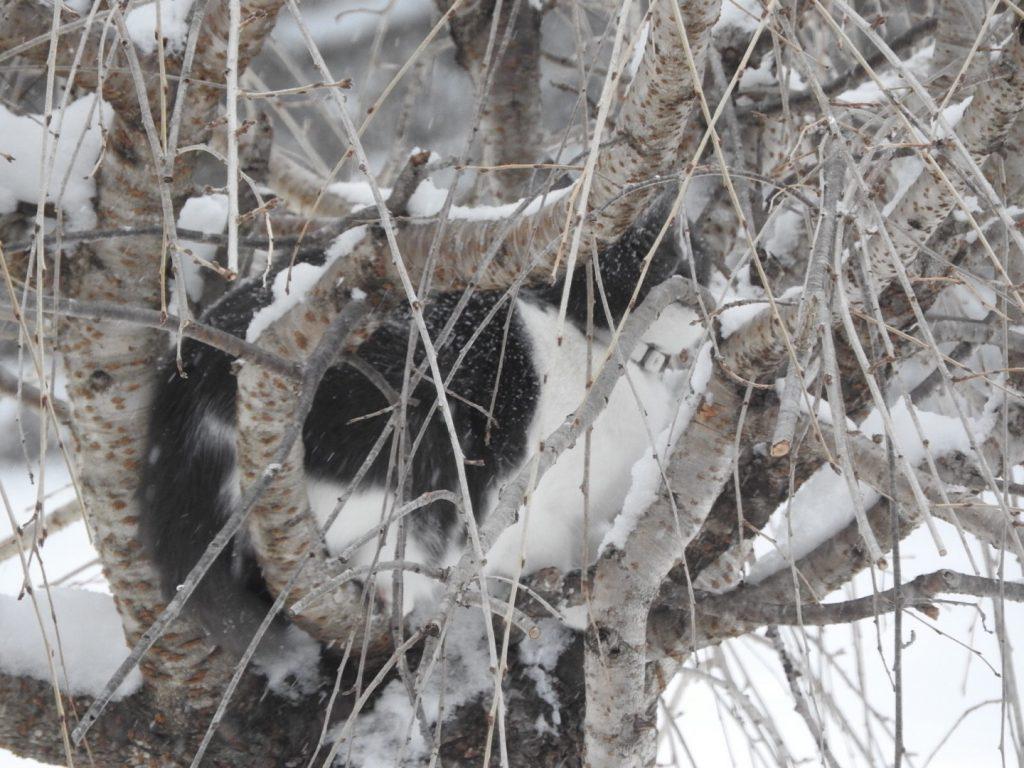 Catbird in the tree