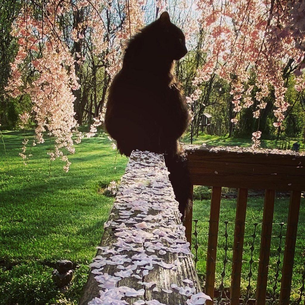 Mia among the blossoms