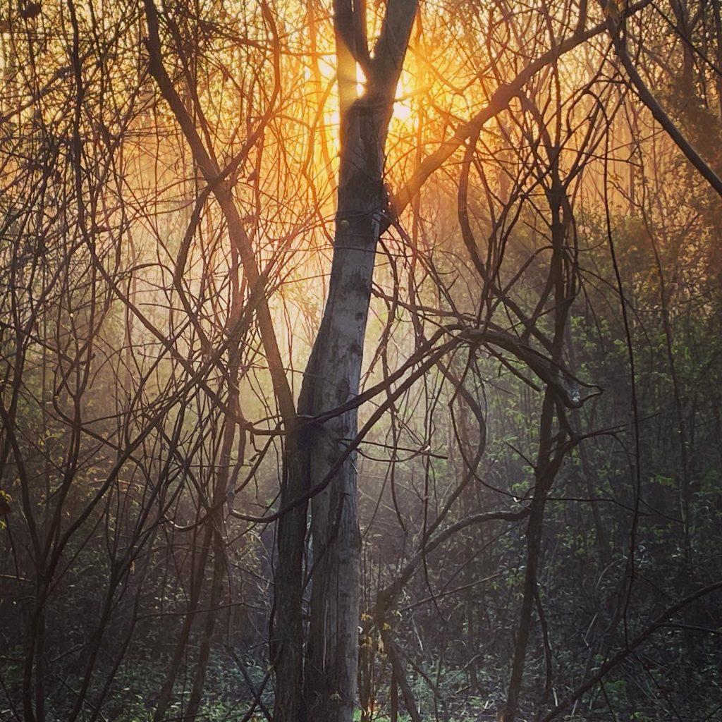 Misty magic