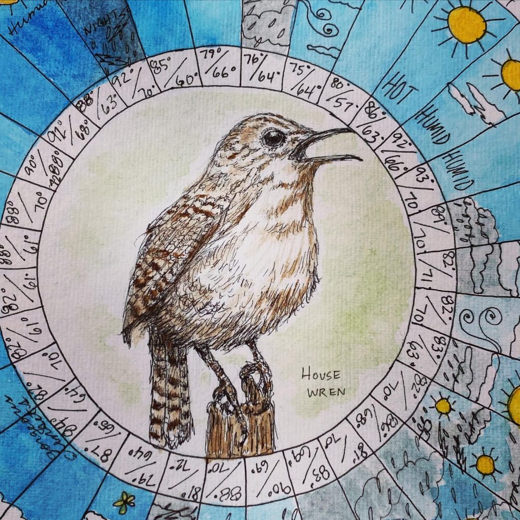 Fifty Cent, the House Wren