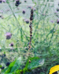 Industrious spider
